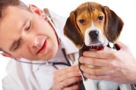Vet Check Beagle.jpg