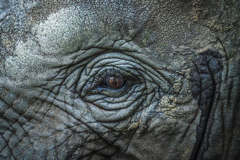 Elephant.800.jpg