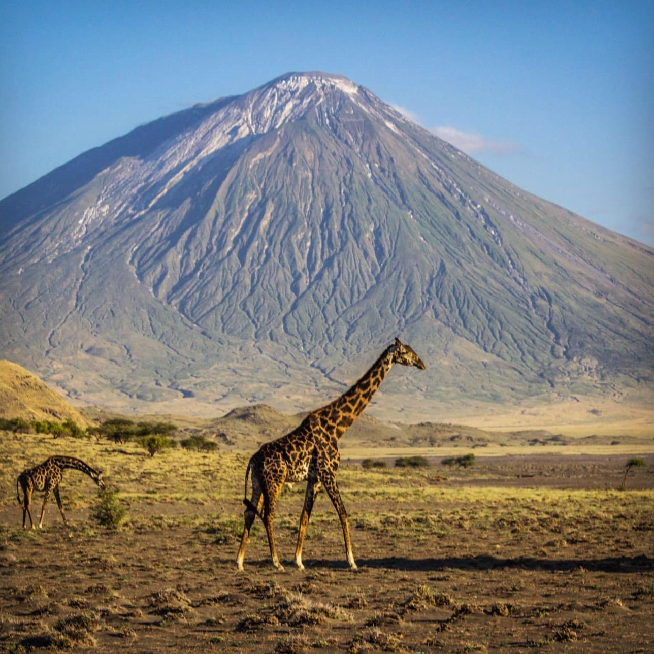 Giraffe&OlDoinyoLengai.jpg