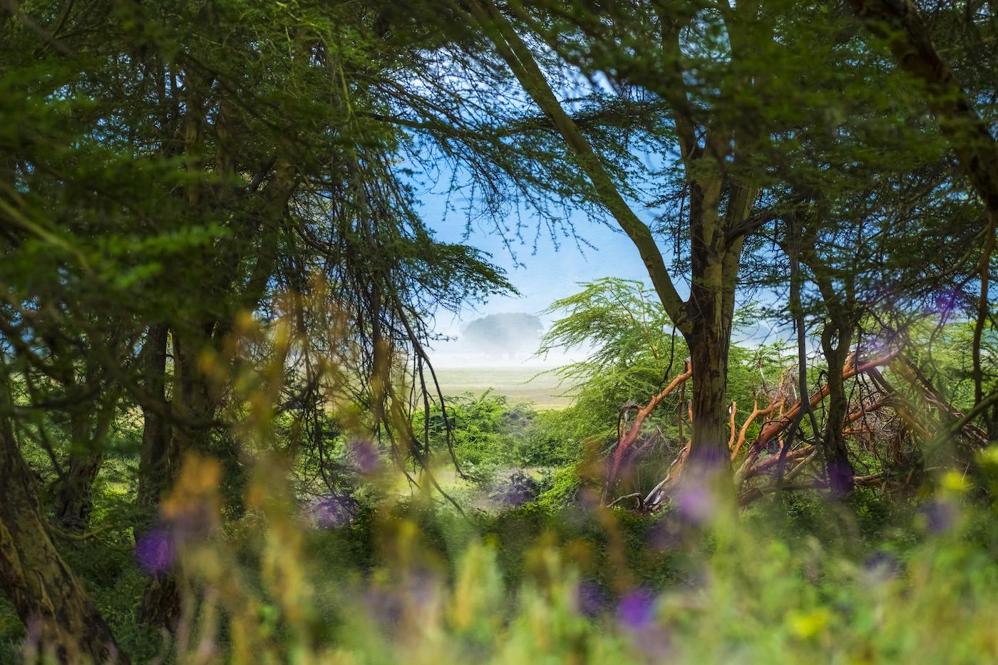 NgorongoroFrame1400.jpg