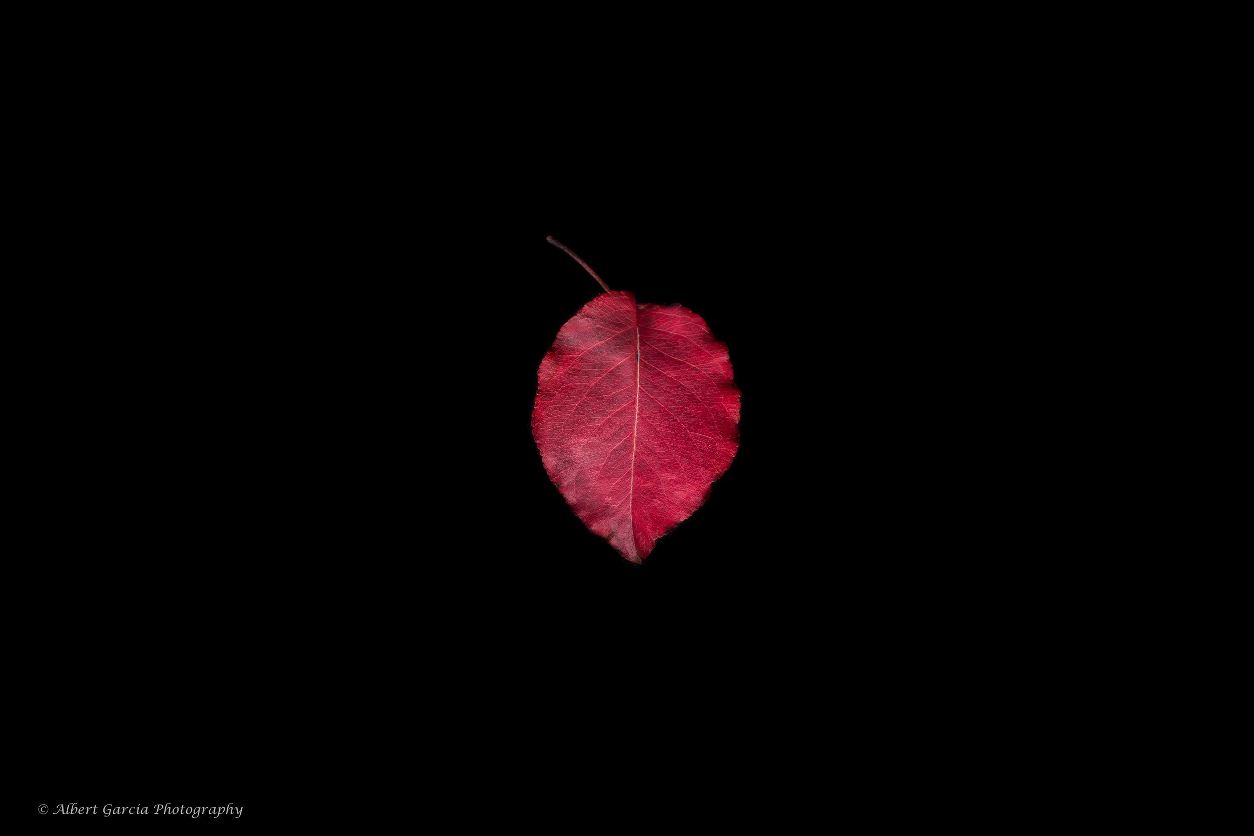 fall leaf 76.jpg