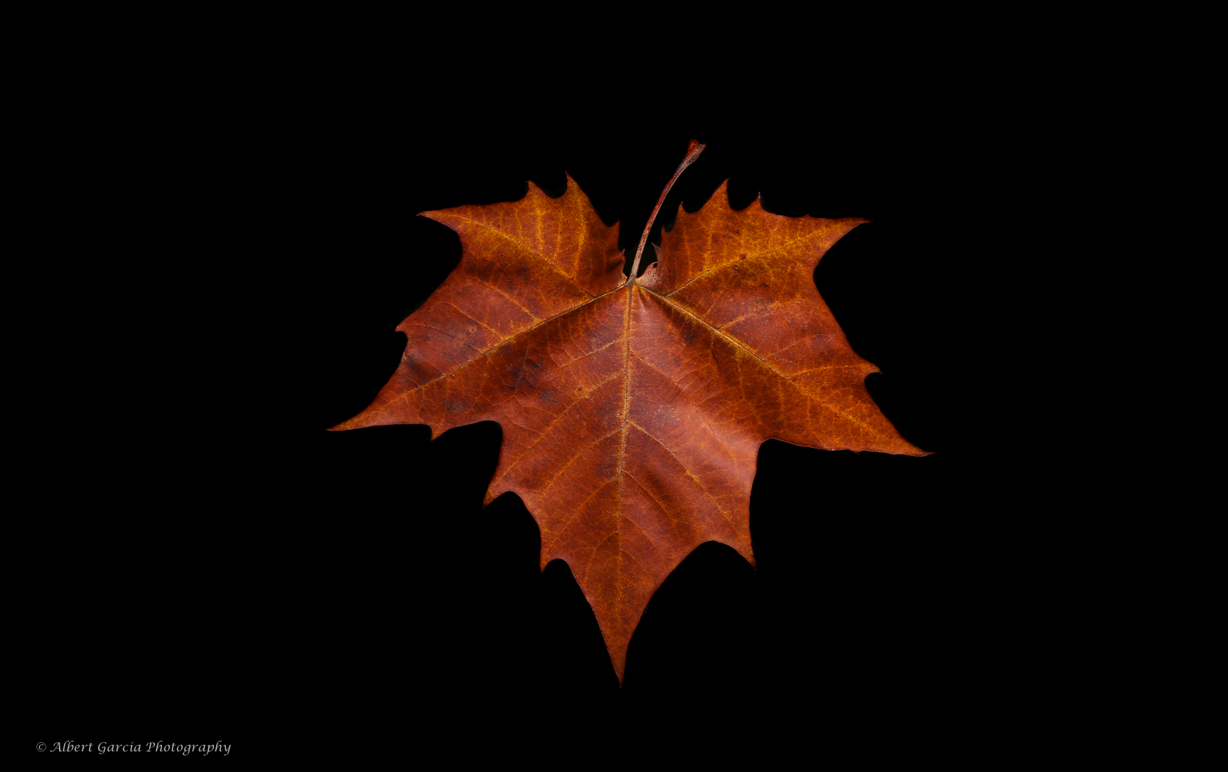 winter soltice low.jpg