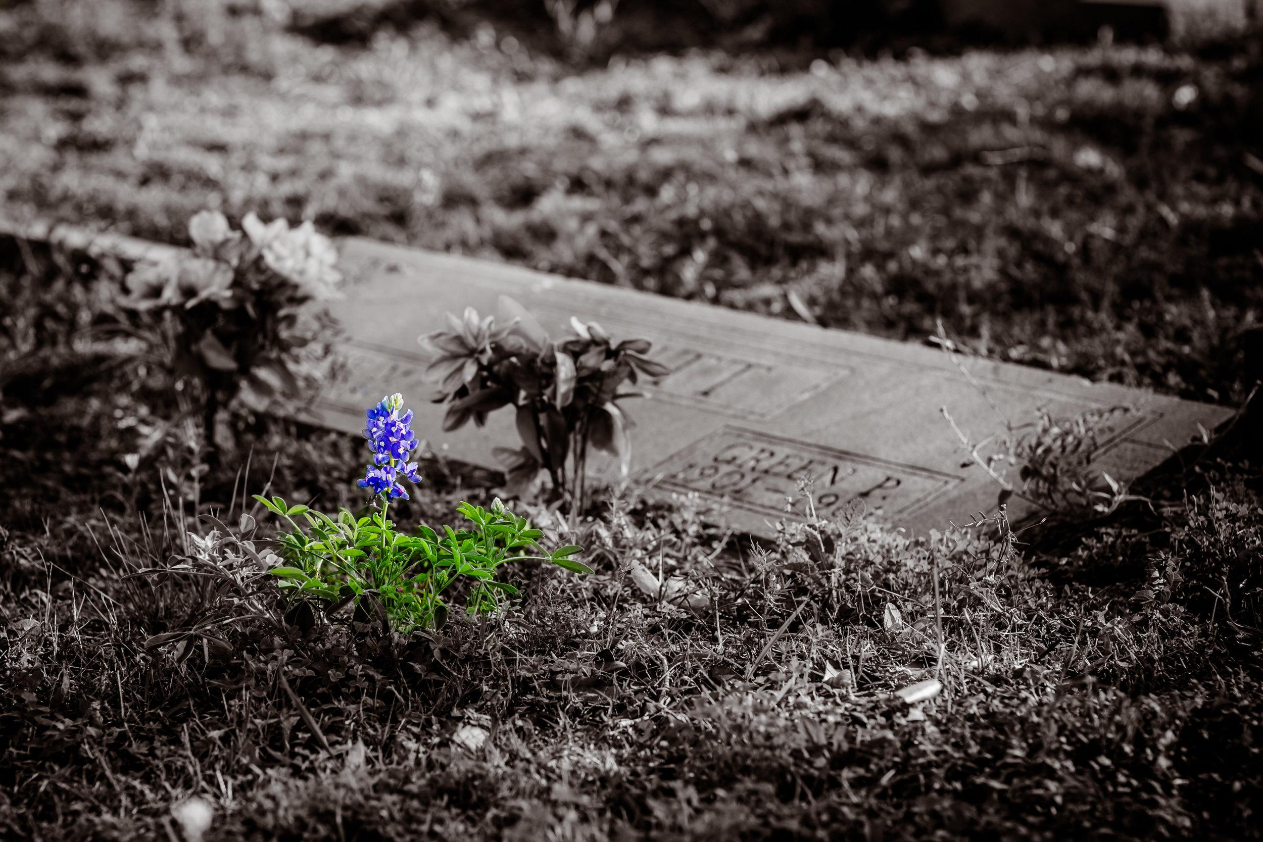 bb cemetery no WM - 250.jpg