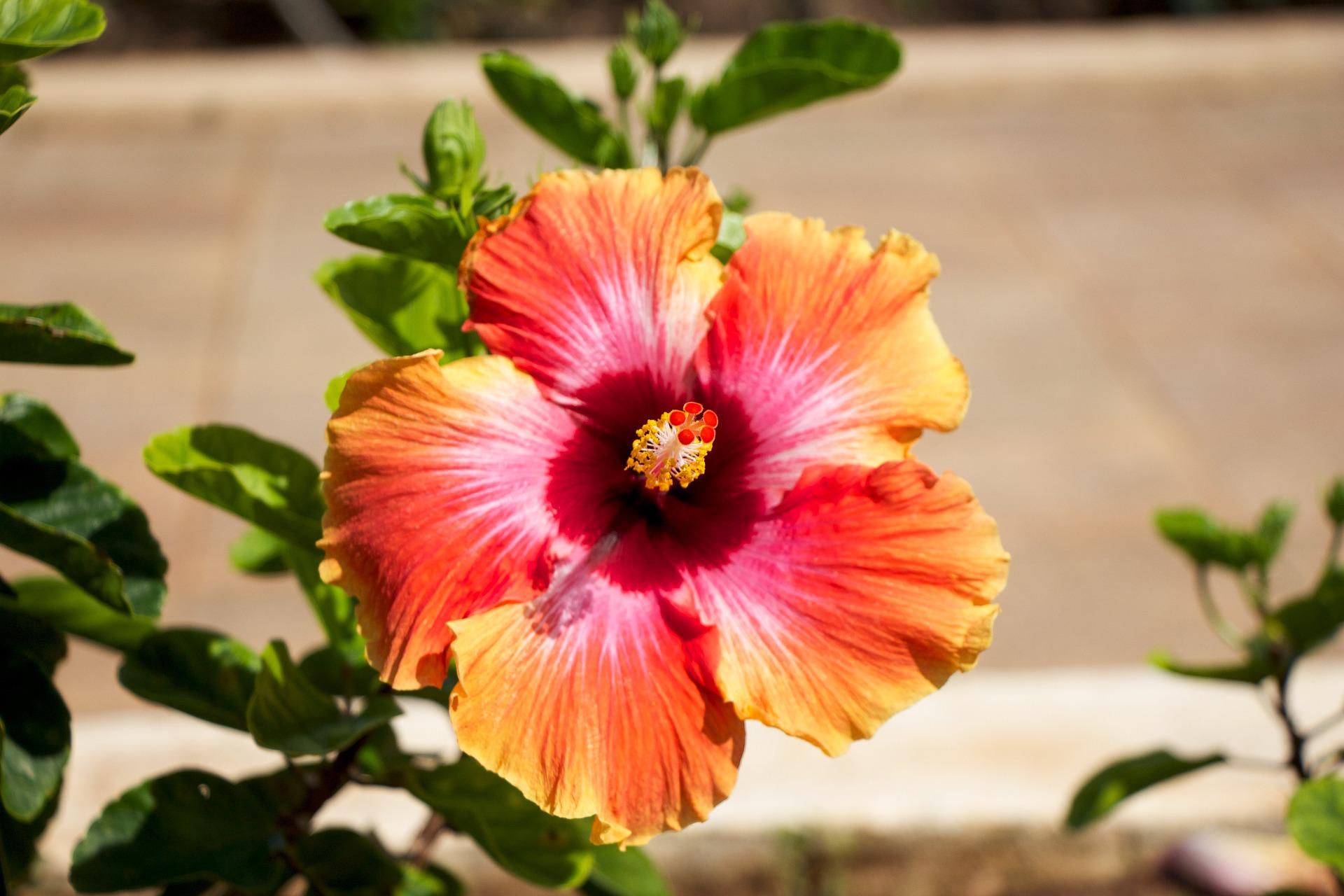 hawaii-1438855_1920.jpg
