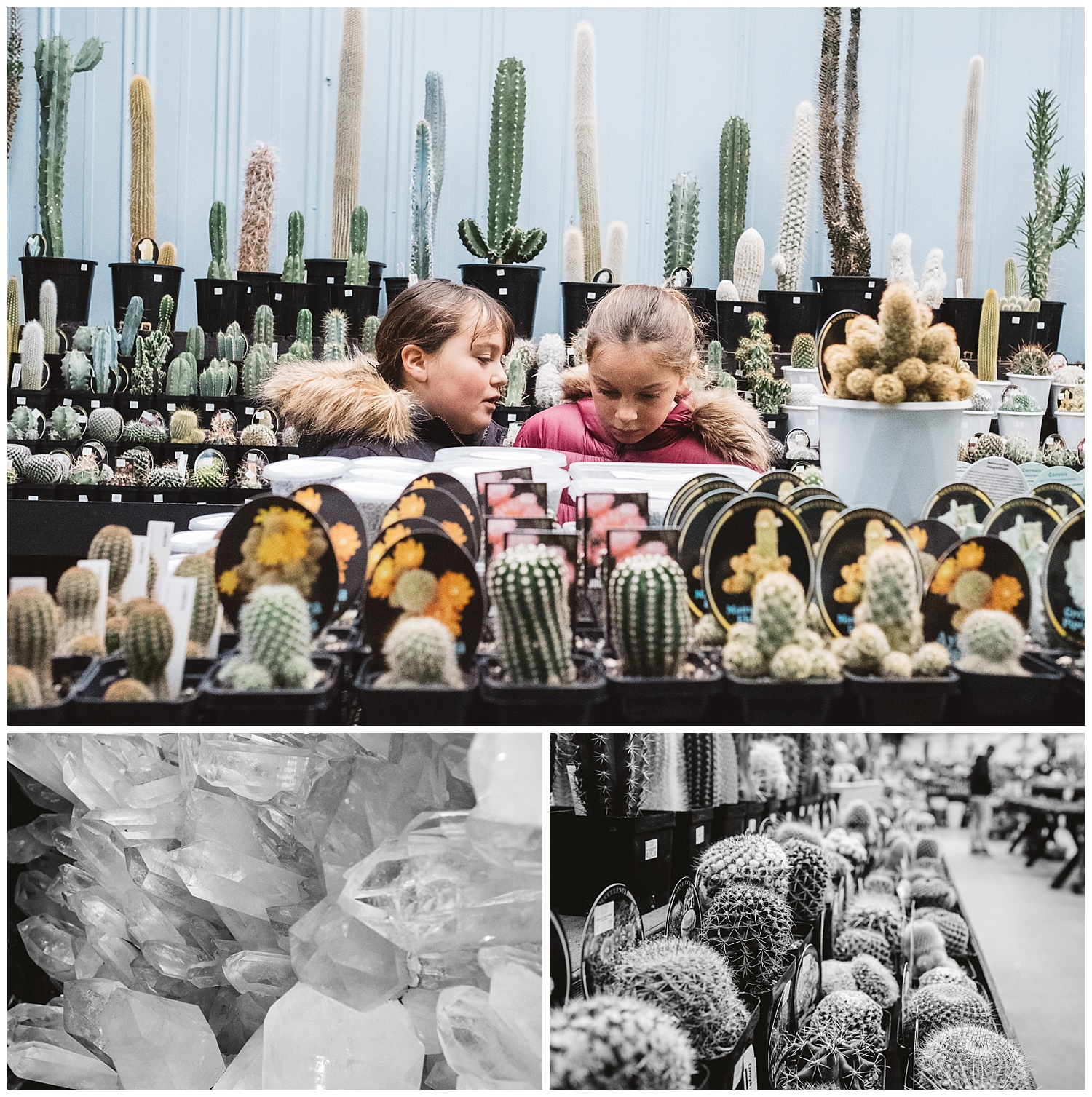 sandringham family in a nursery looking at cactus and stones