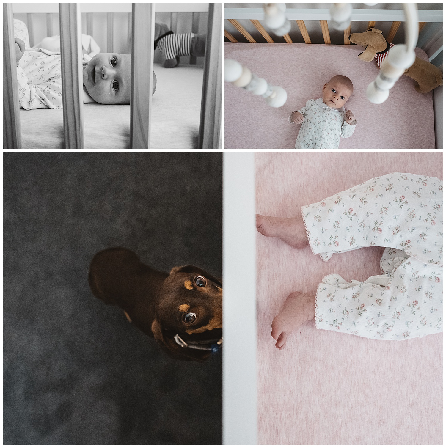 Newborn photography at home in Hampton. Photography sessions including pets