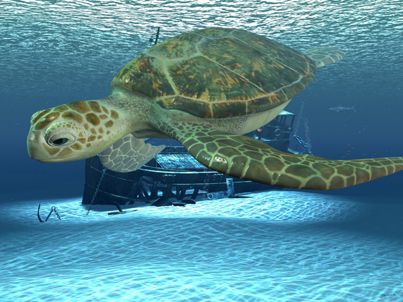 turtle_boat2 copy.jpg