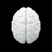 brain 3 dimensional.png