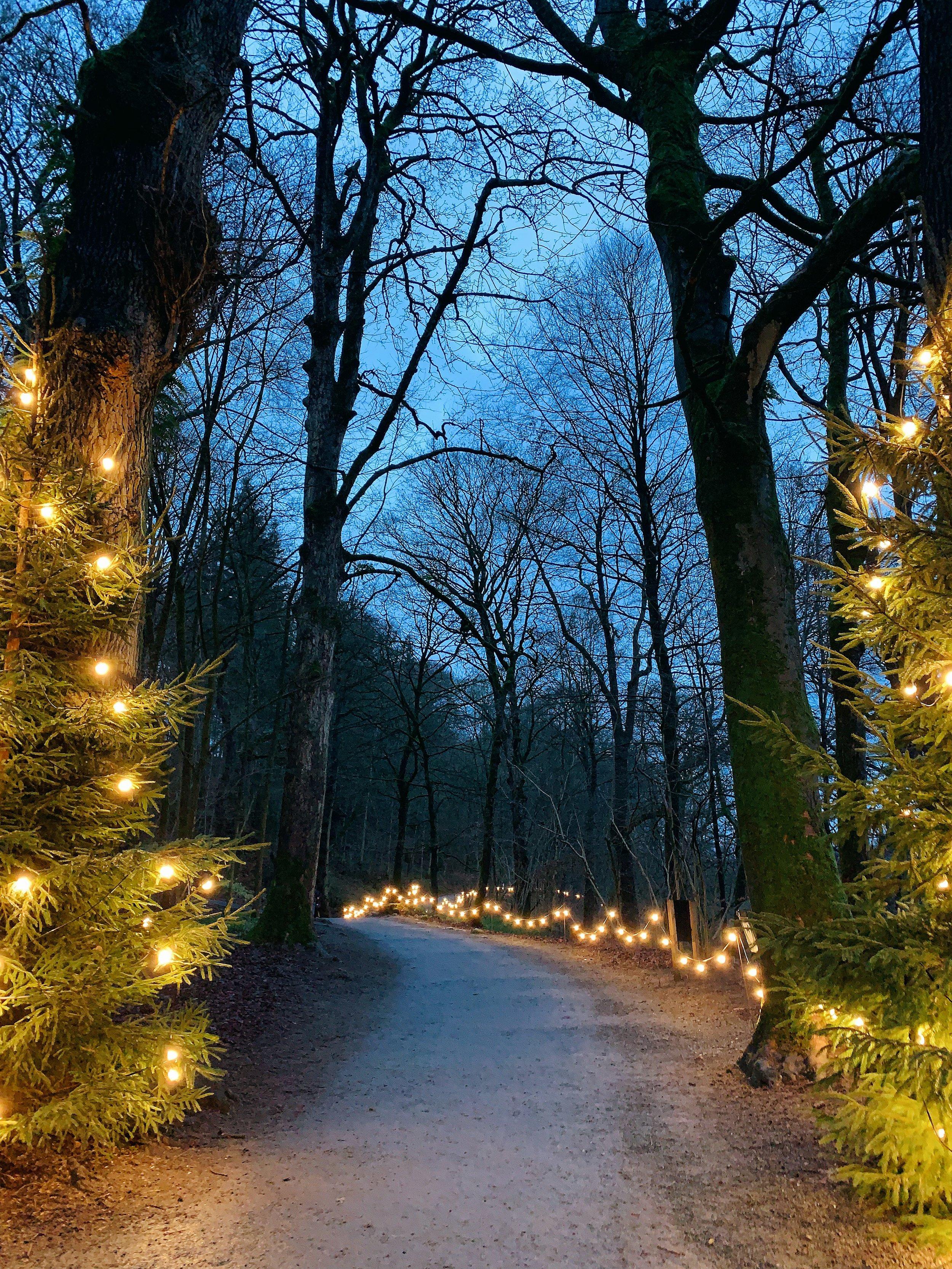 Christmas season in Yorkshire
