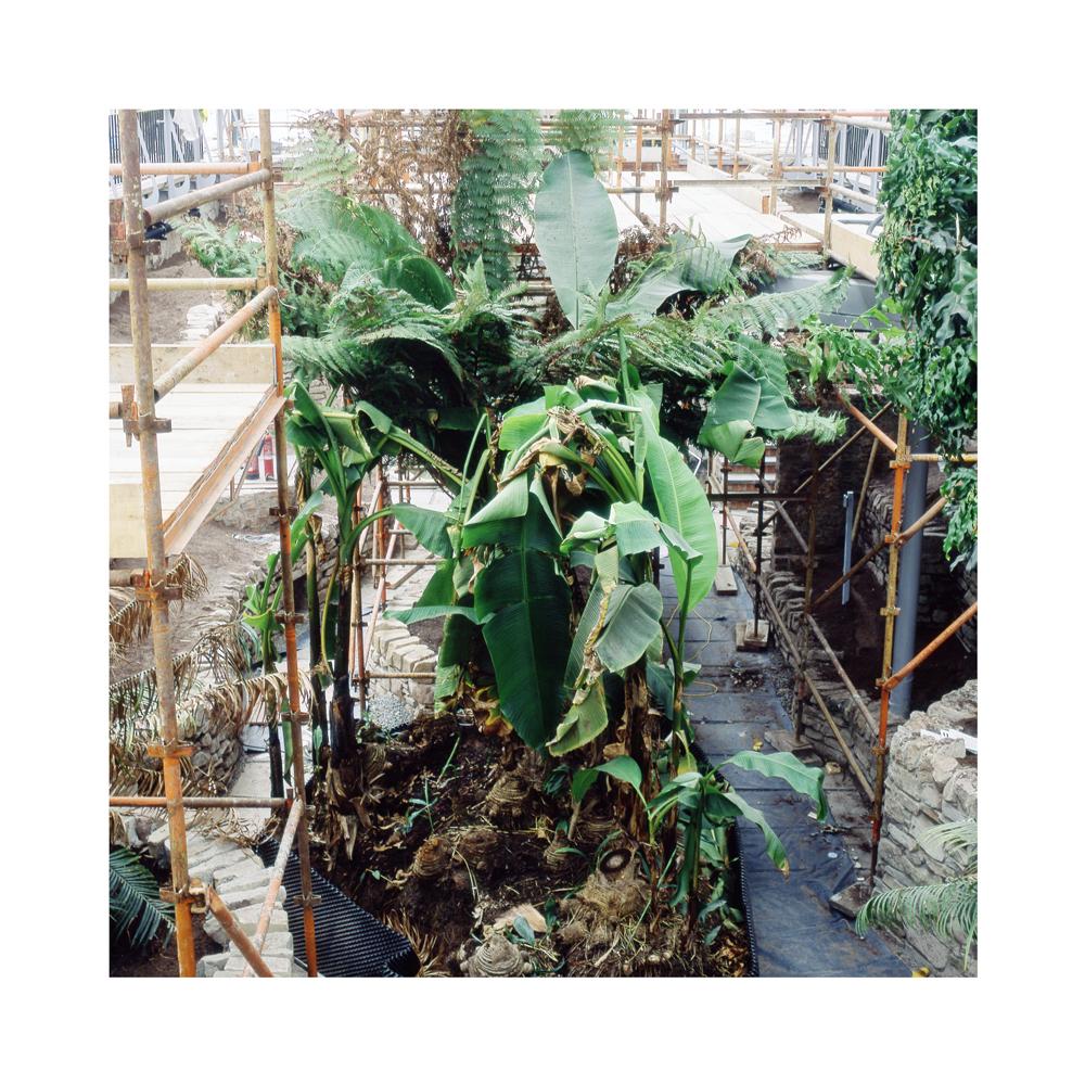 009 Tropical_Ravine_Restoration_Temperate_Zone_Spring_2017_wee.jpg