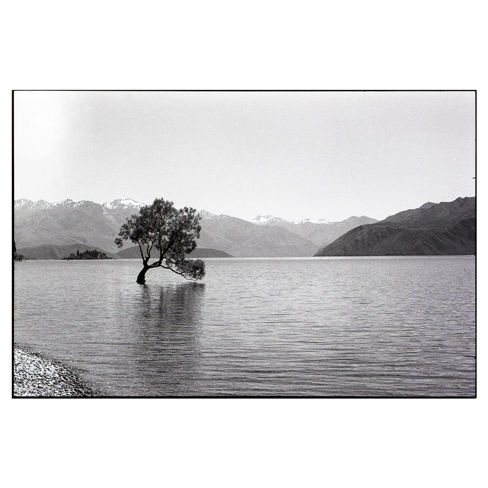 The 'Lone Tree' - Lake Wanaka.