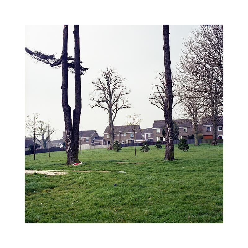012-LoRes-SARobinson-Ballymacash Paramilitary Punishment Trees-wee.jpg