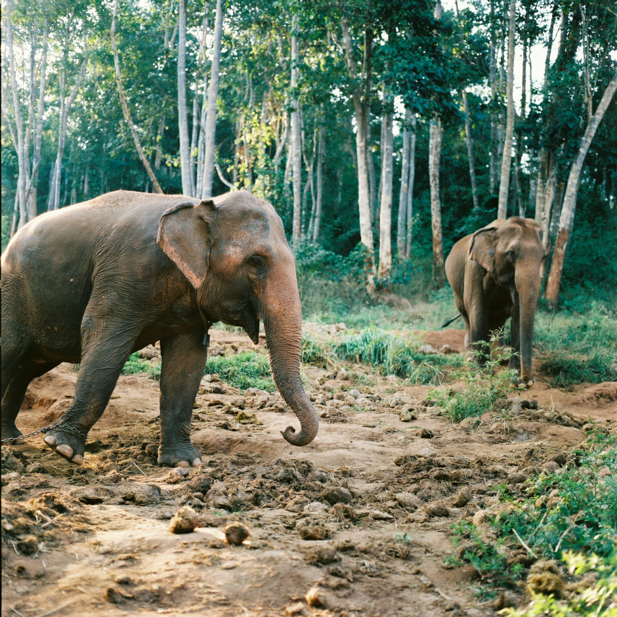 Worth Traveling For: Chiang Mai's Ethical Elephant Sanctuary