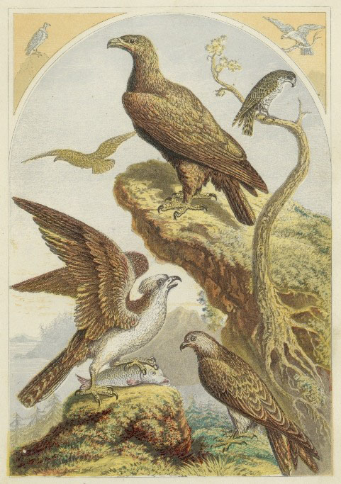 birds-of-prey-01.jpg