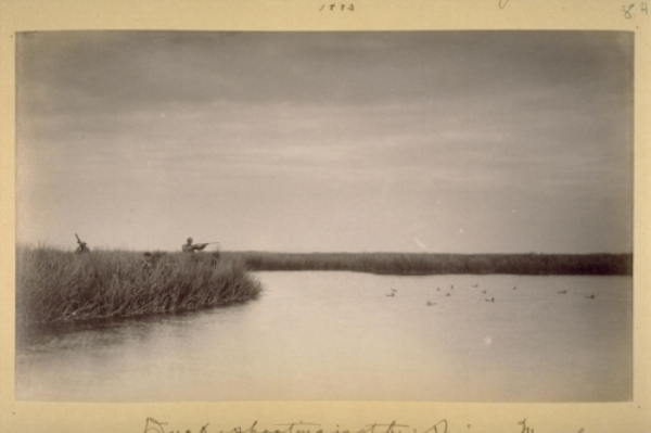 """Duck shooting in the Suisun Marshes. """"Judd's Stand."""" 1883. Image in care of UC Berkeley, The Bancroft Library, Harry Babcock Photograph Albums, Volume 2"""
