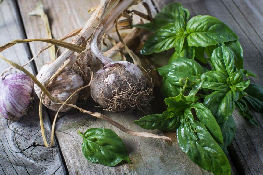 basil-garlic.JPG