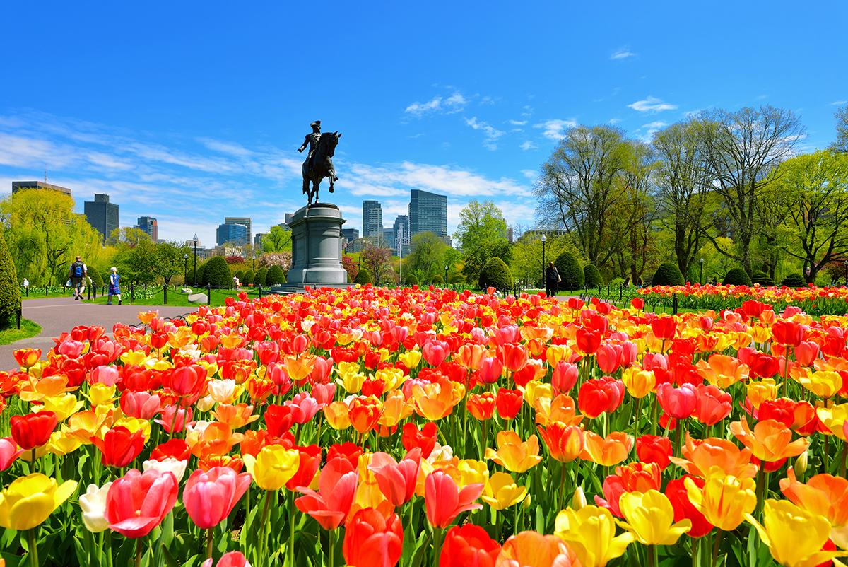 boston-public-garden.jpg