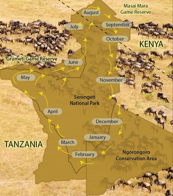 The migration of the wildebeest shown month by month