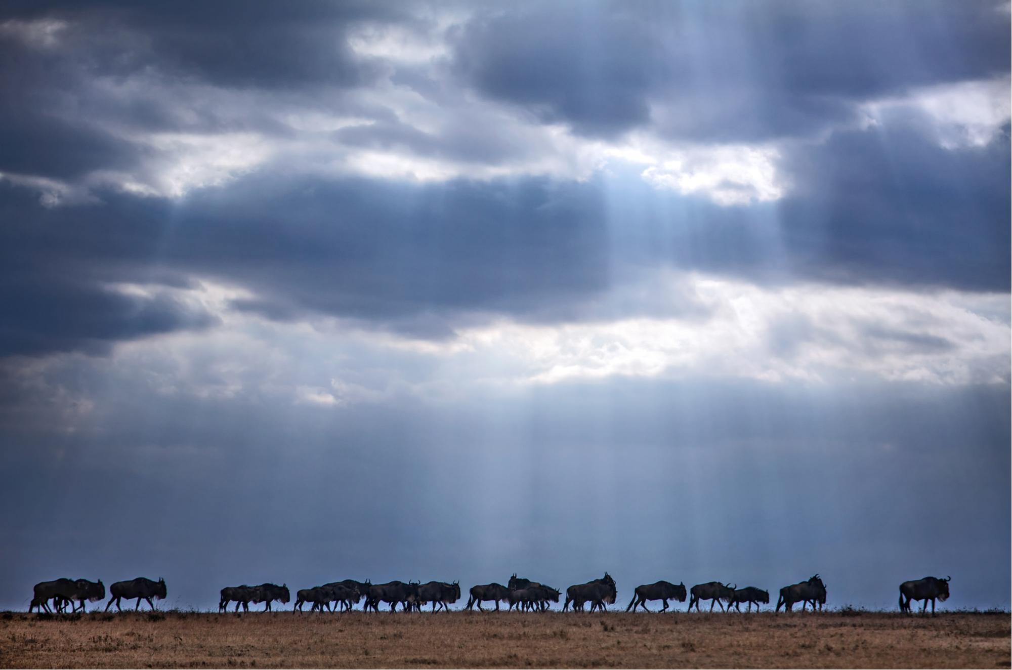 The Great Wildebeest Migration -