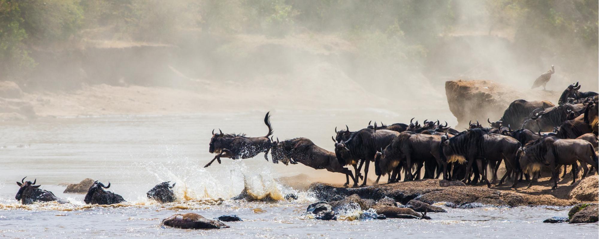 The Great Wildebeest Migration through the Serengeti and Ngorongoro National Parks
