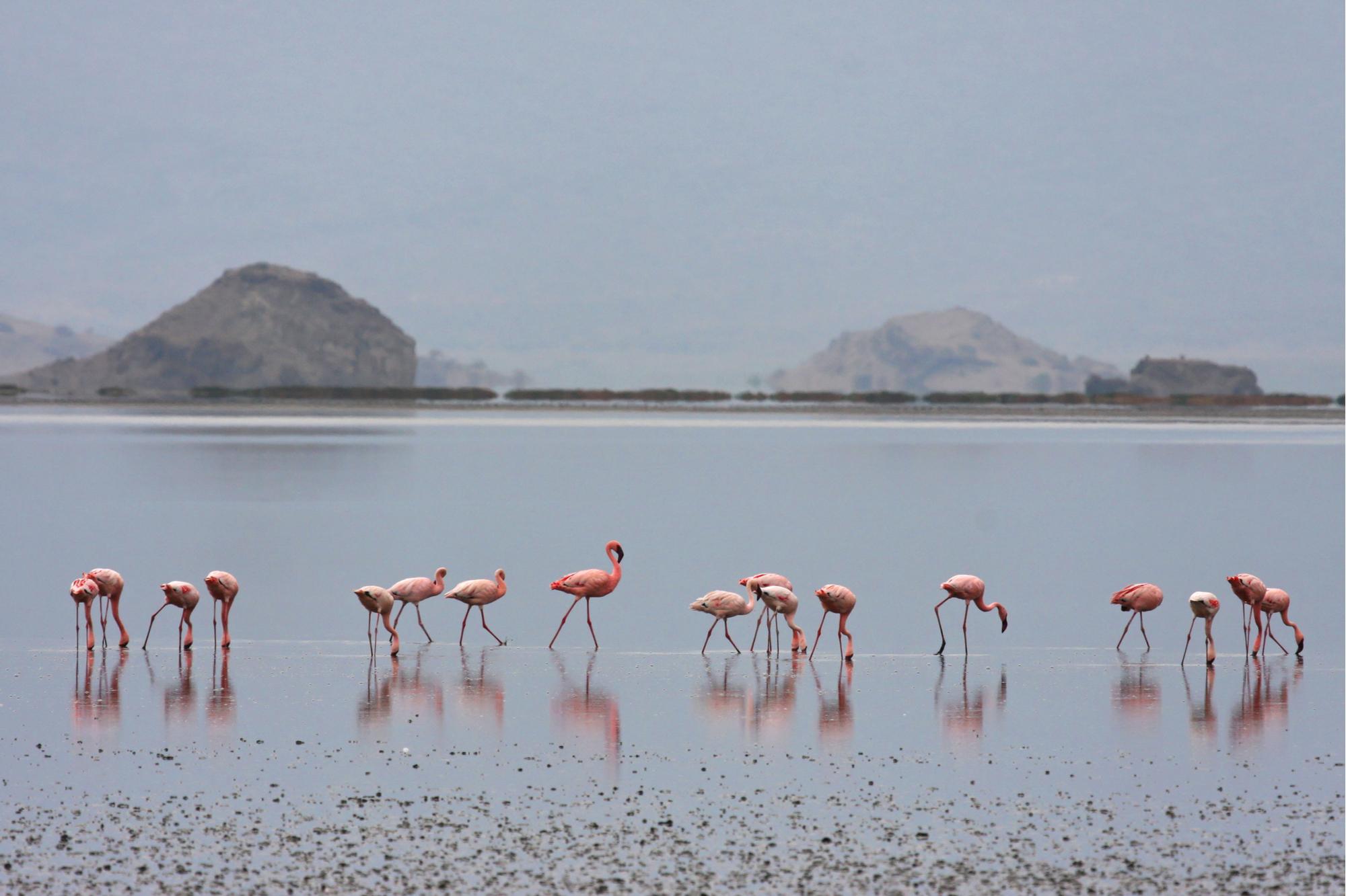 Flamingoes at Lake Natron