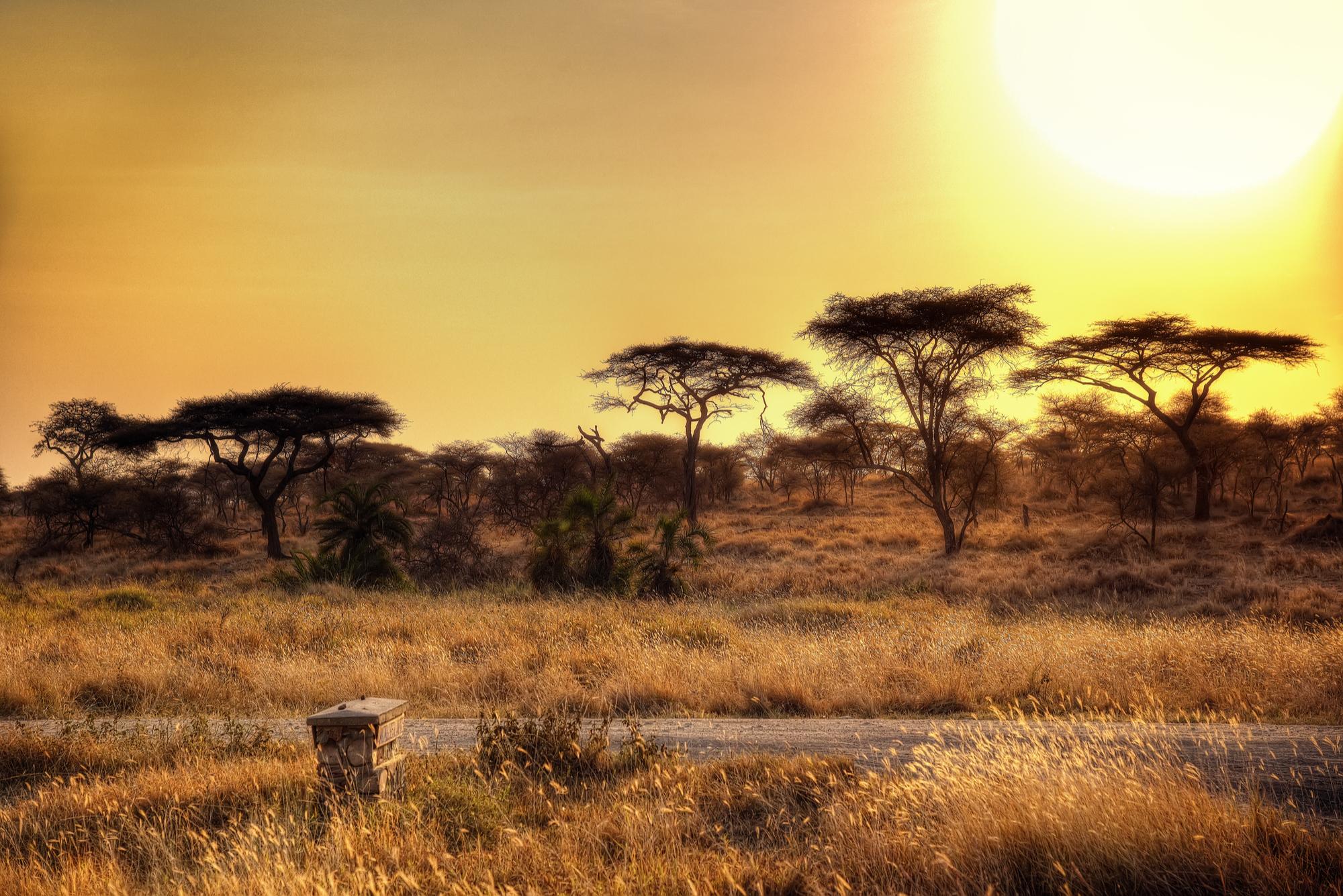 Serengeti-Open-Plains-Sunset.jpg