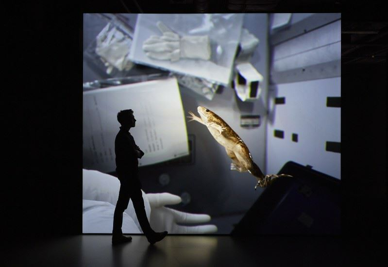 X. laevis (Spacelab) 2017, John Gerrard. Commissioned by Wellcome Collection for Electricity: The spark of life. Image courtesy of Wellcome Collection