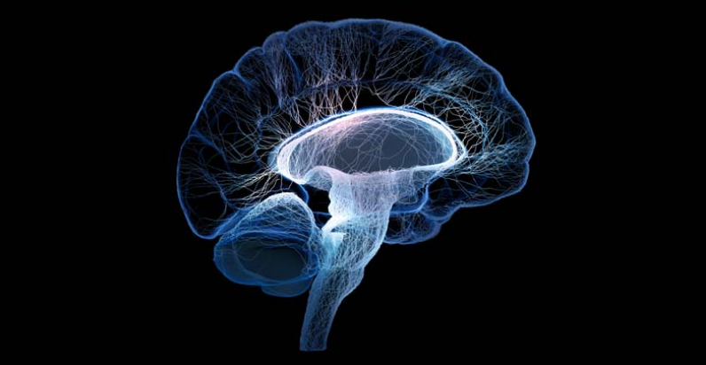 Boosting the Athletic Brain - From Nerve Cells to the Grey Matter
