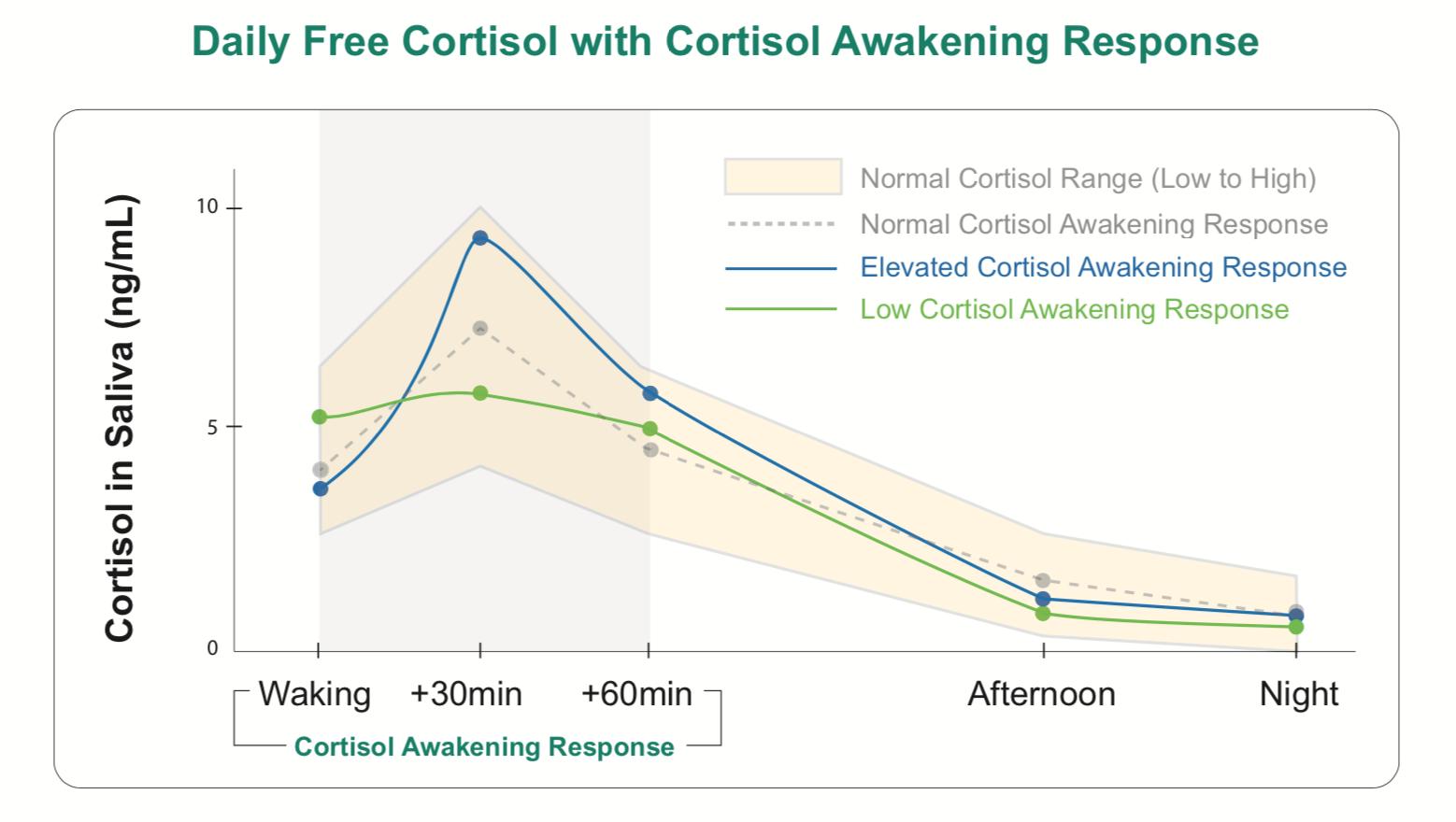 DUTCH Test - Cortisol Awakening Response.png