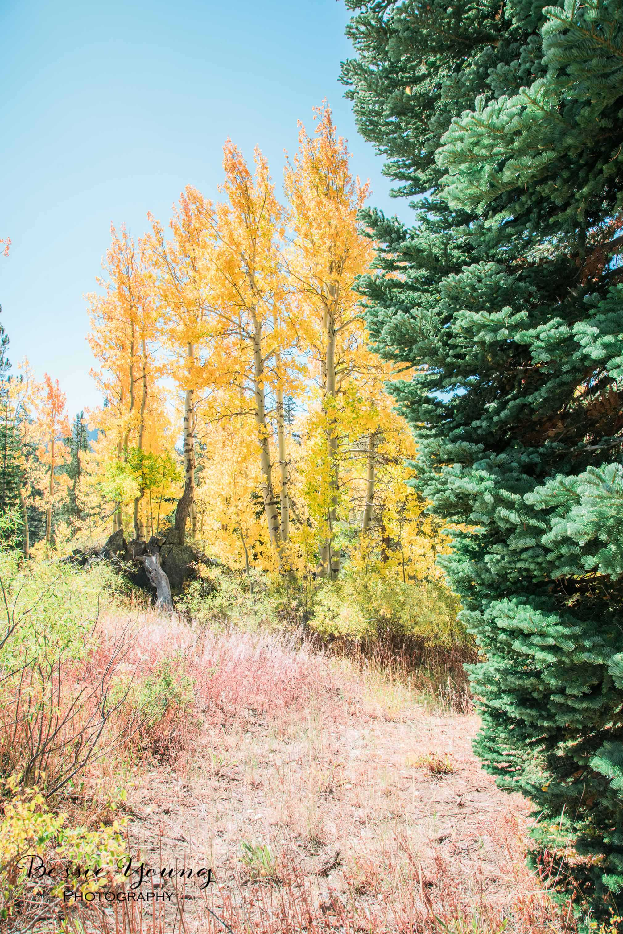 Hope Valley October 2016 - Bessie Young Photography-12.jpg