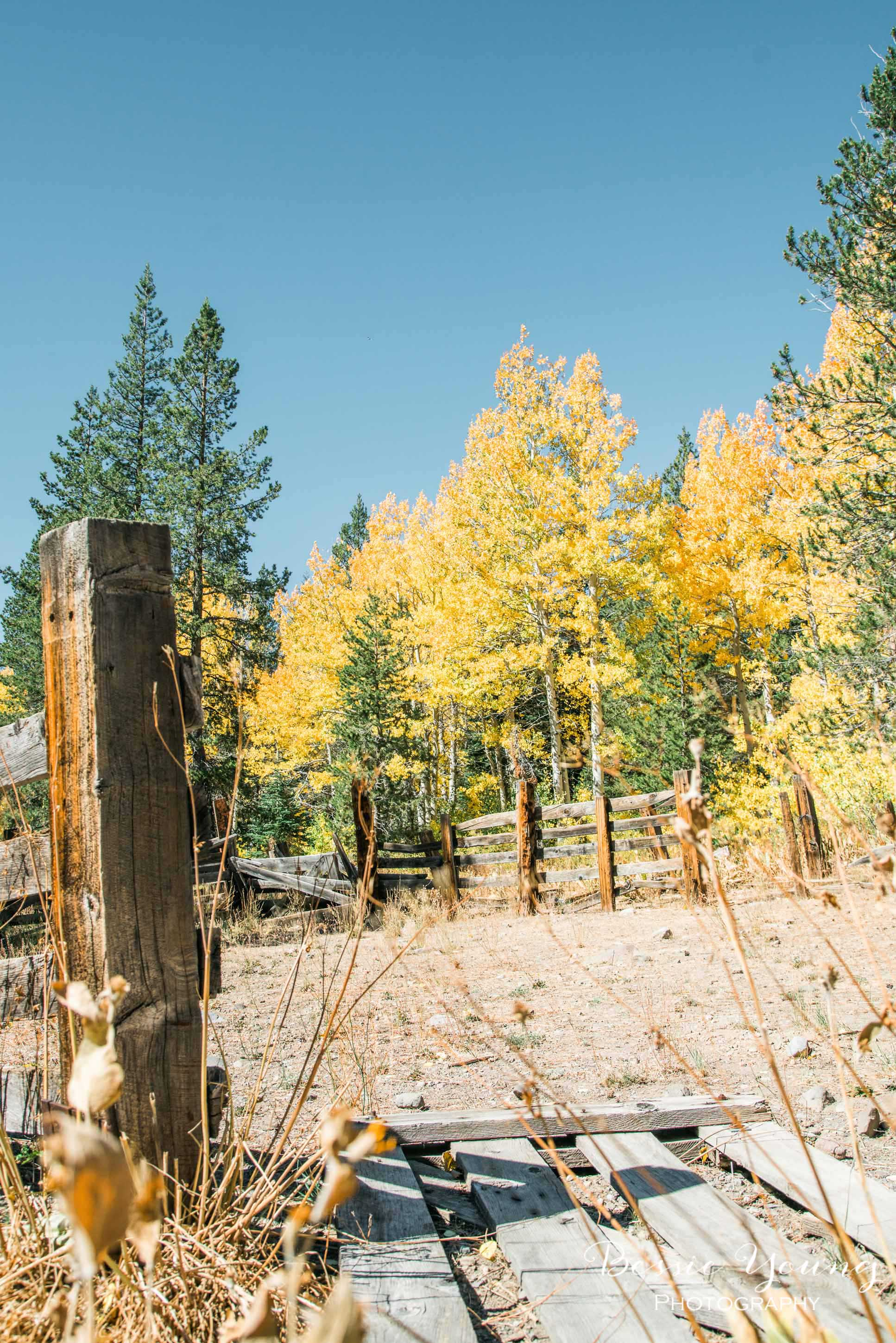 Hope Valley October 2016 - Bessie Young Photography-26.jpg