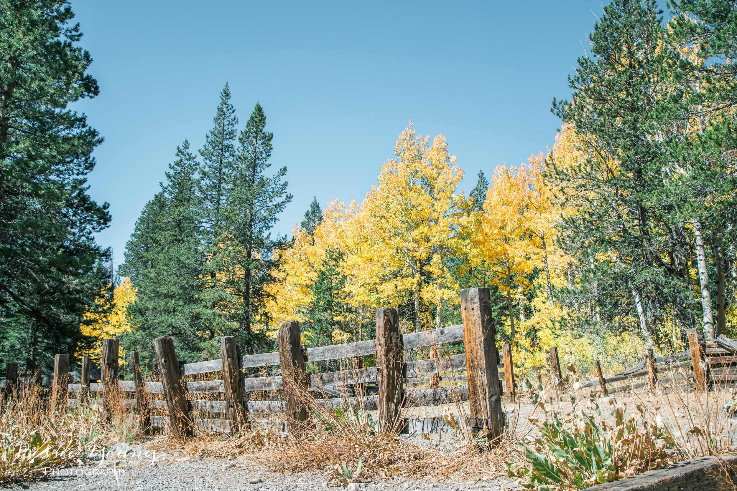 Hope Valley October 2016 - Bessie Young Photography-25.jpg