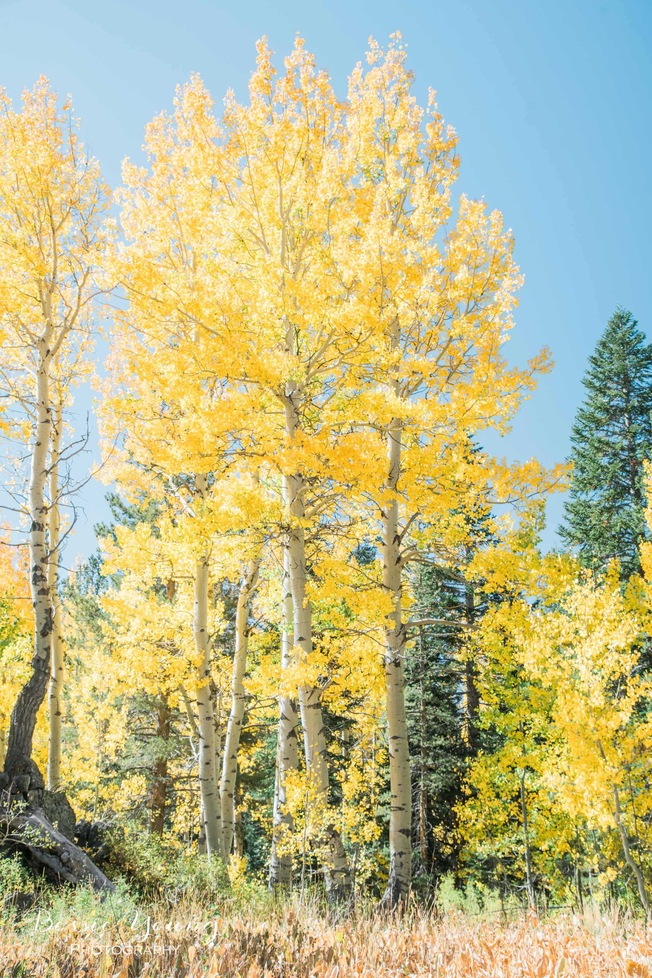 Hope Valley October 2016 - Bessie Young Photography-21.jpg