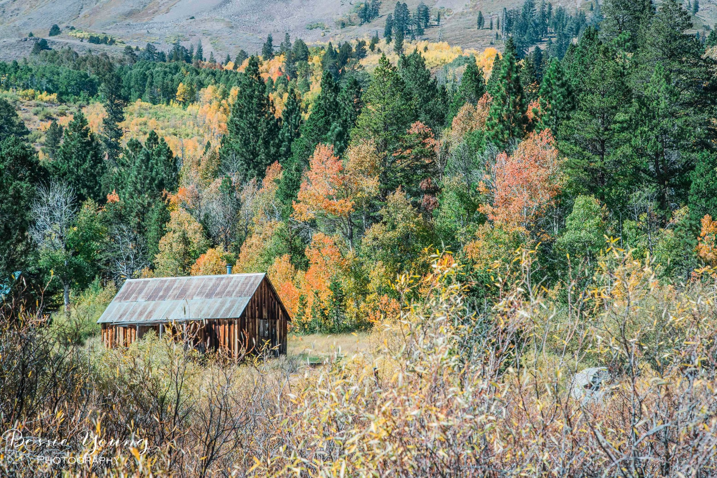 Hope Valley Cabin By Bessie Young