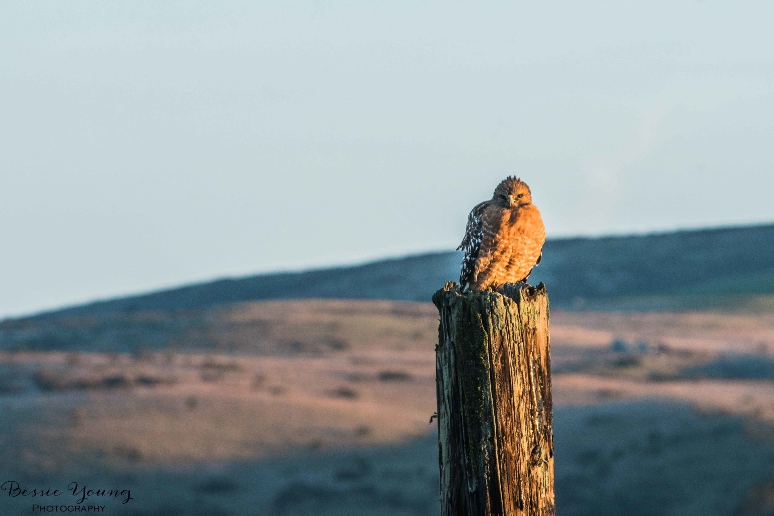 Point Reyes National Seashore 2016 - Bessie Young Photography-11.jpg