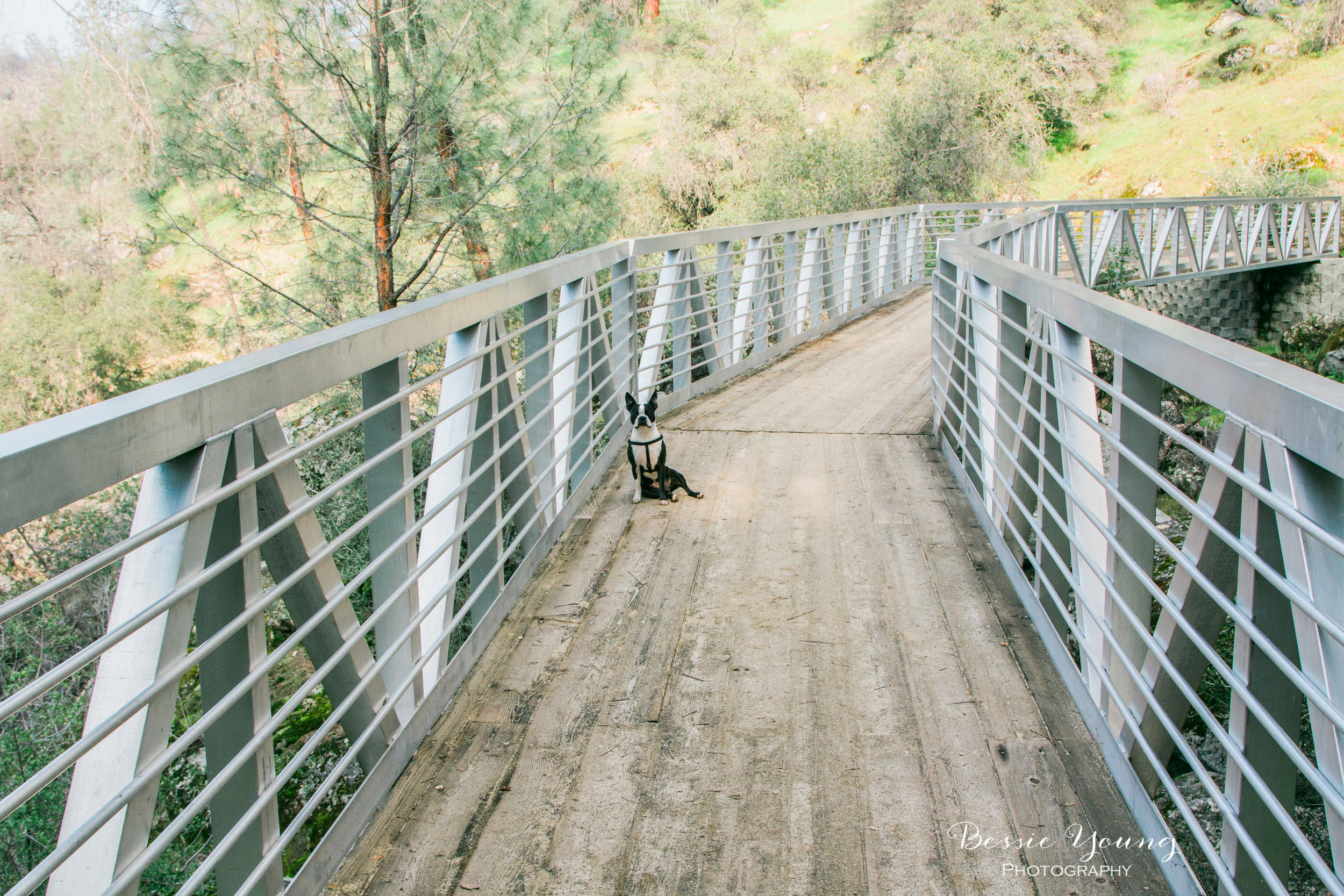 San Joaquin River Trail - California Hiking Trail - Fresno by Bessie Young Photography