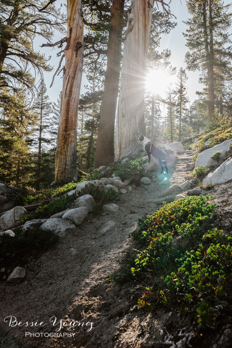 Backpacking Cliff Lake - Dinkey Lakes Wilderness - Landscape Photography by Bessie Young - California Hiking Trails