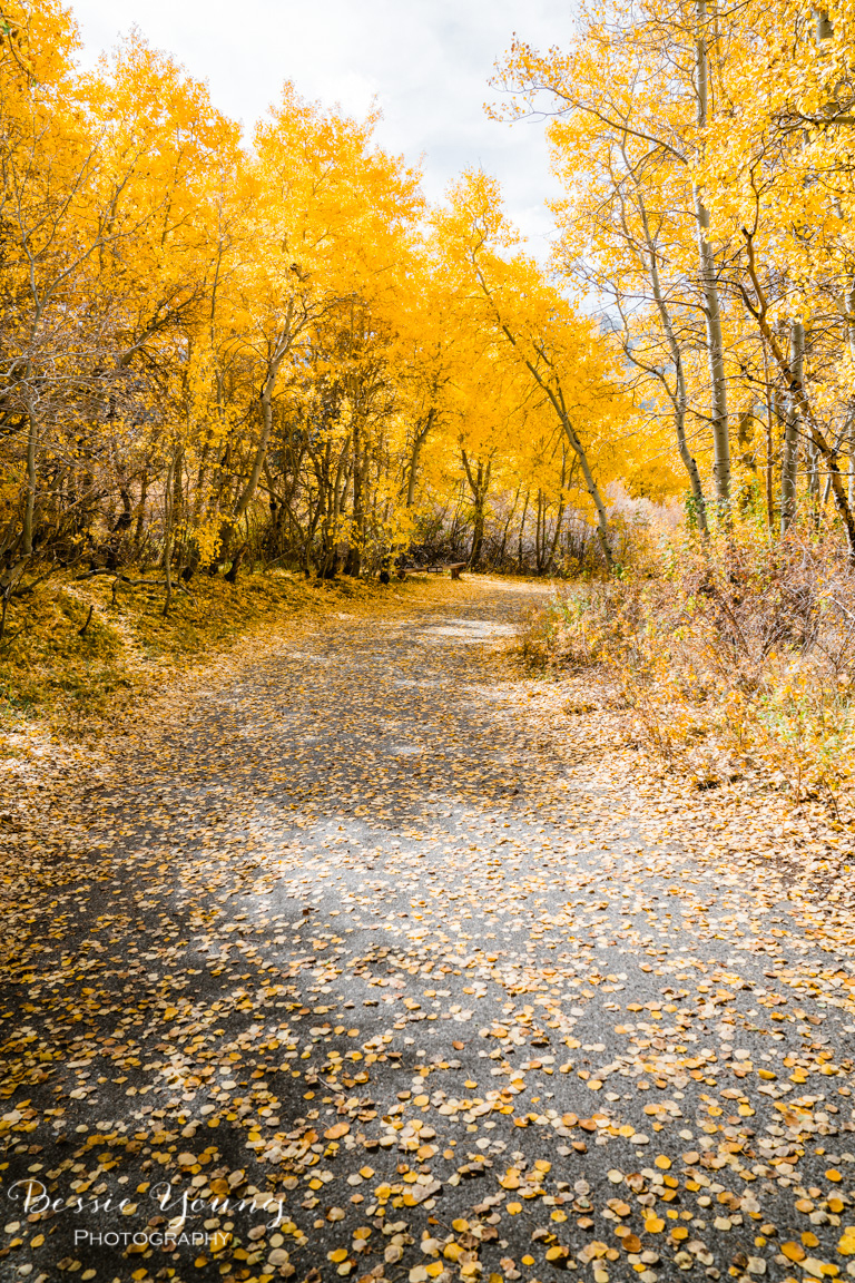 Aspen covered roads by Bessie Young Photography.jpg