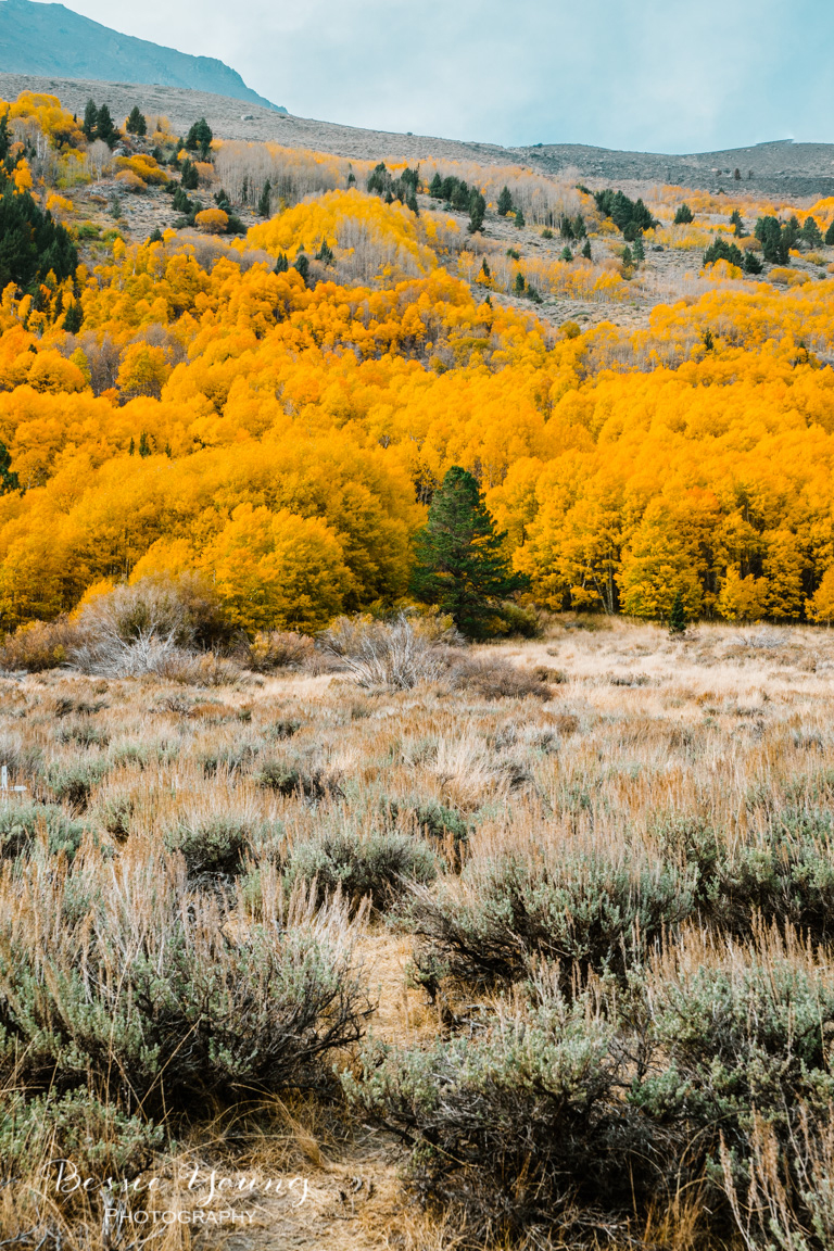 Fall Landscape Photography June Lake California by Bessie Young 6.jpg