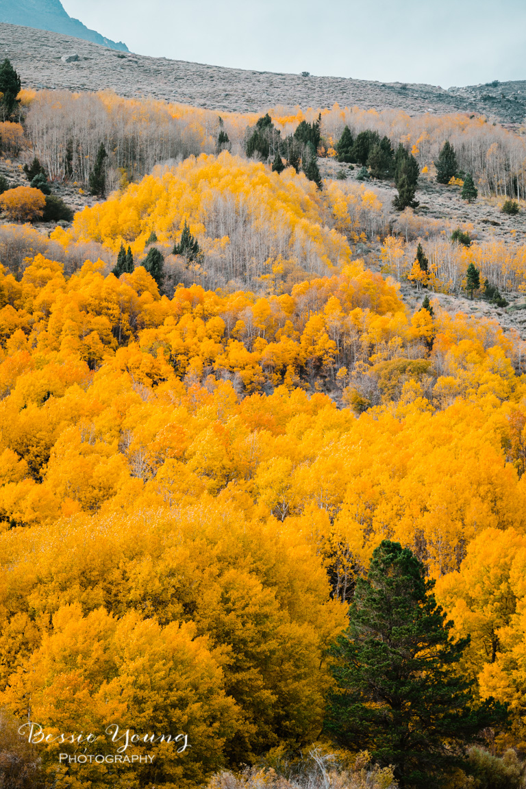 Fall Landscape Photography June Lake California by Bessie Young 10.jpg