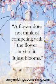 COMPARISON BLOG FLOWERS BLOOM PIC 2.jpg