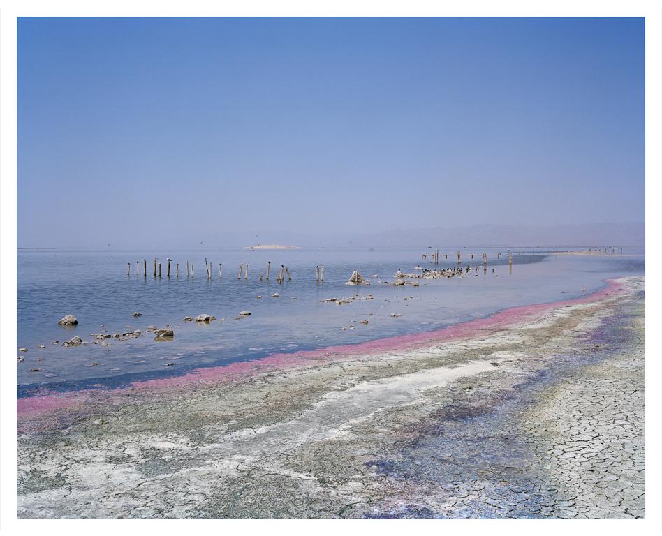 Sea+(algal+bloom).jpg