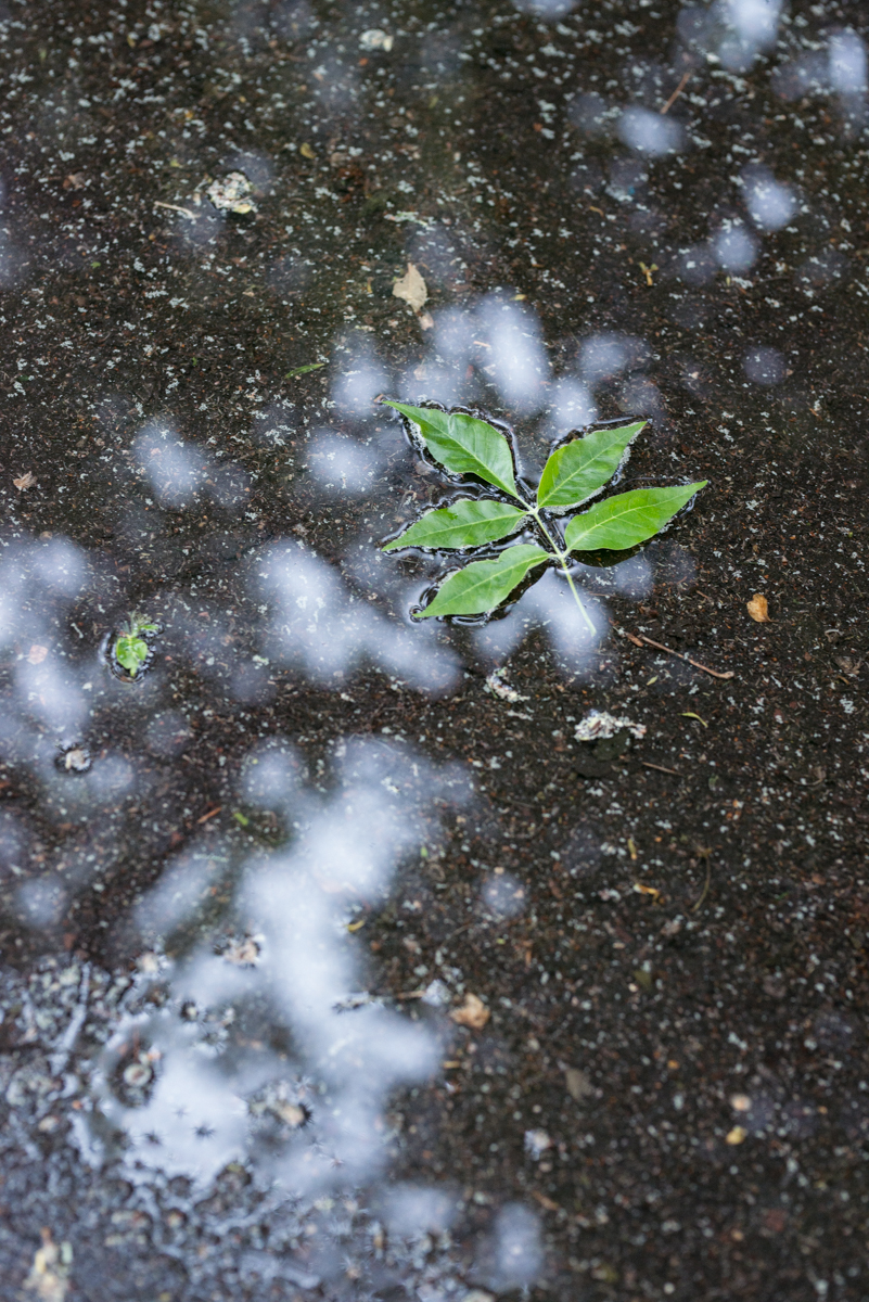 180502-Rain-082744.jpg