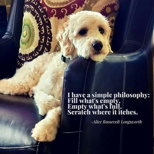 It's that simple! (Really) Puppy philosopher.  #philanthropy  #dogsofinstagram
