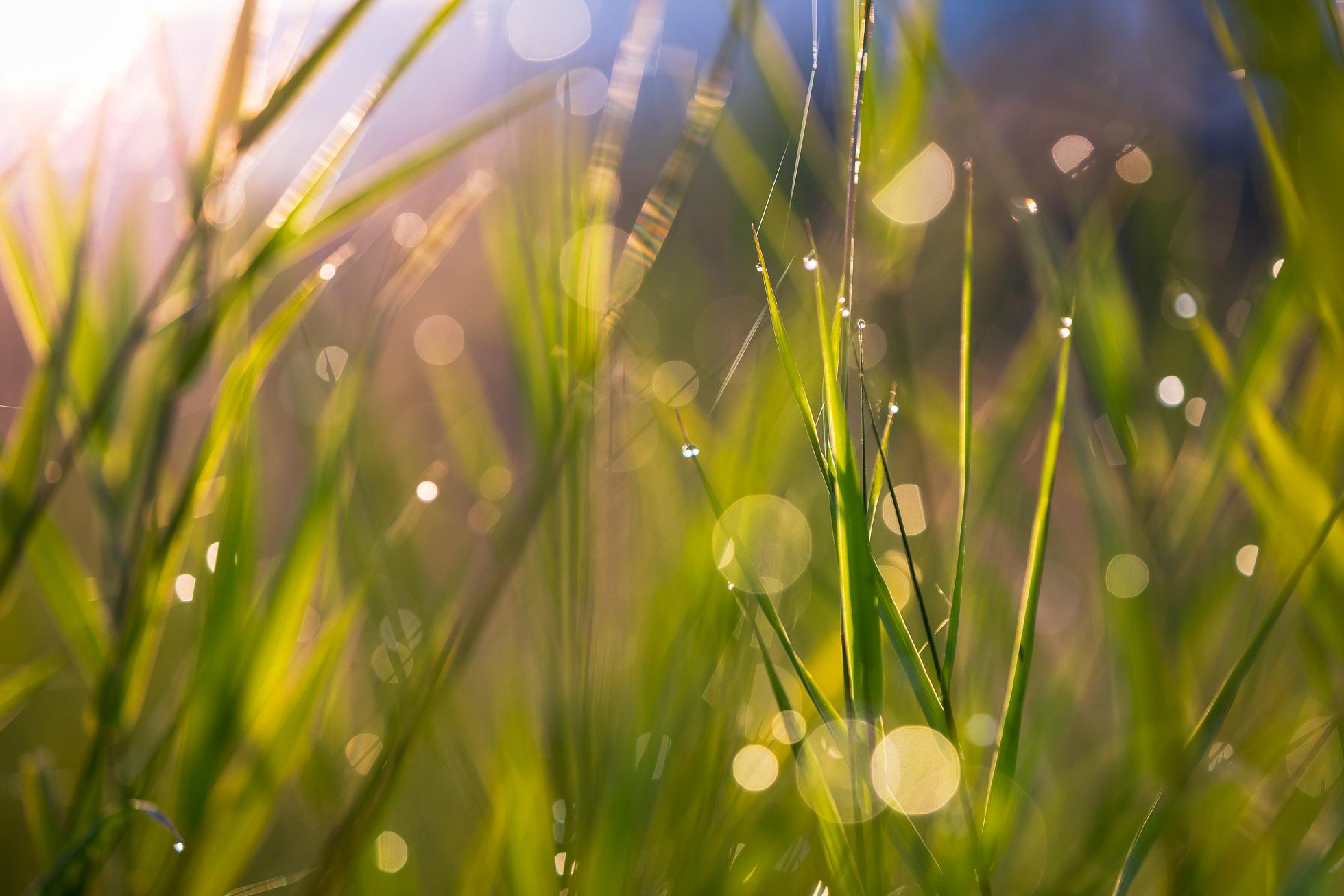 dewdrop bokeh in the grass