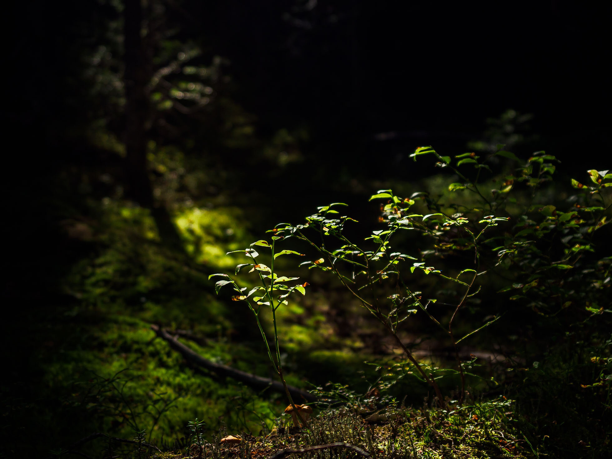 Amazing filtered light and foliage in the forest