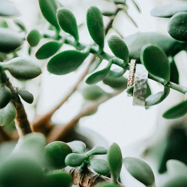 🙌 #weddingbandsandsucculents #cassialawrencephotography