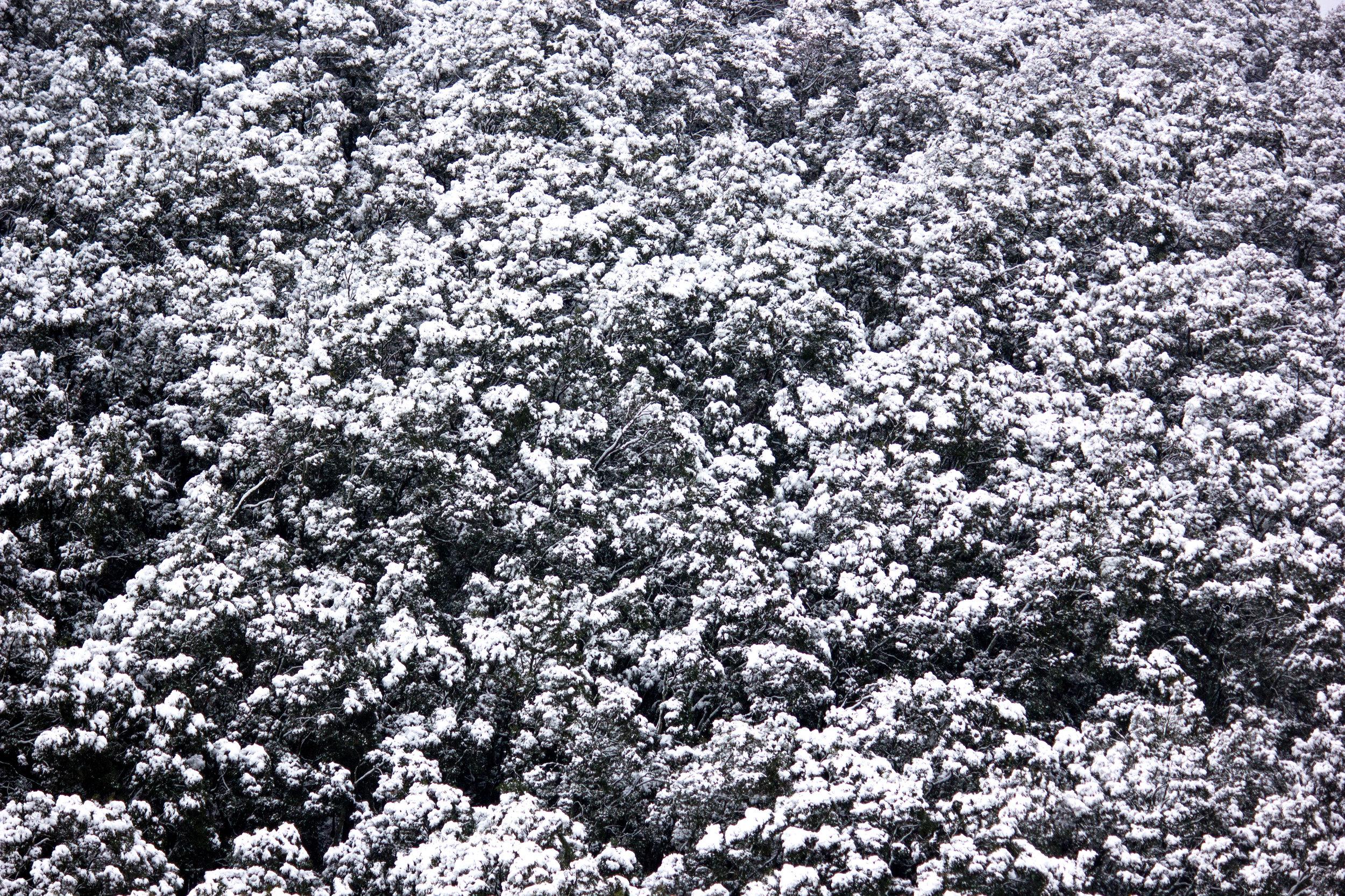 snowtikka-5.jpg