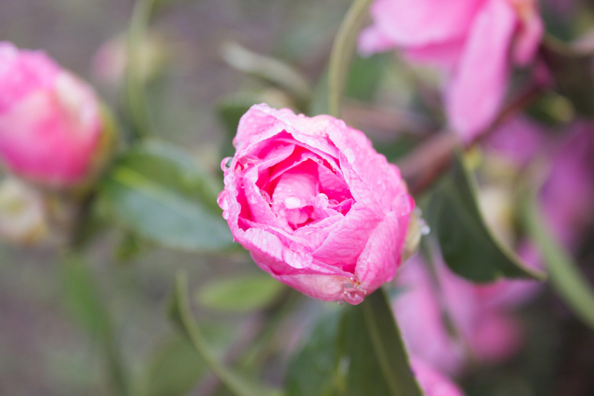spring-9.jpg