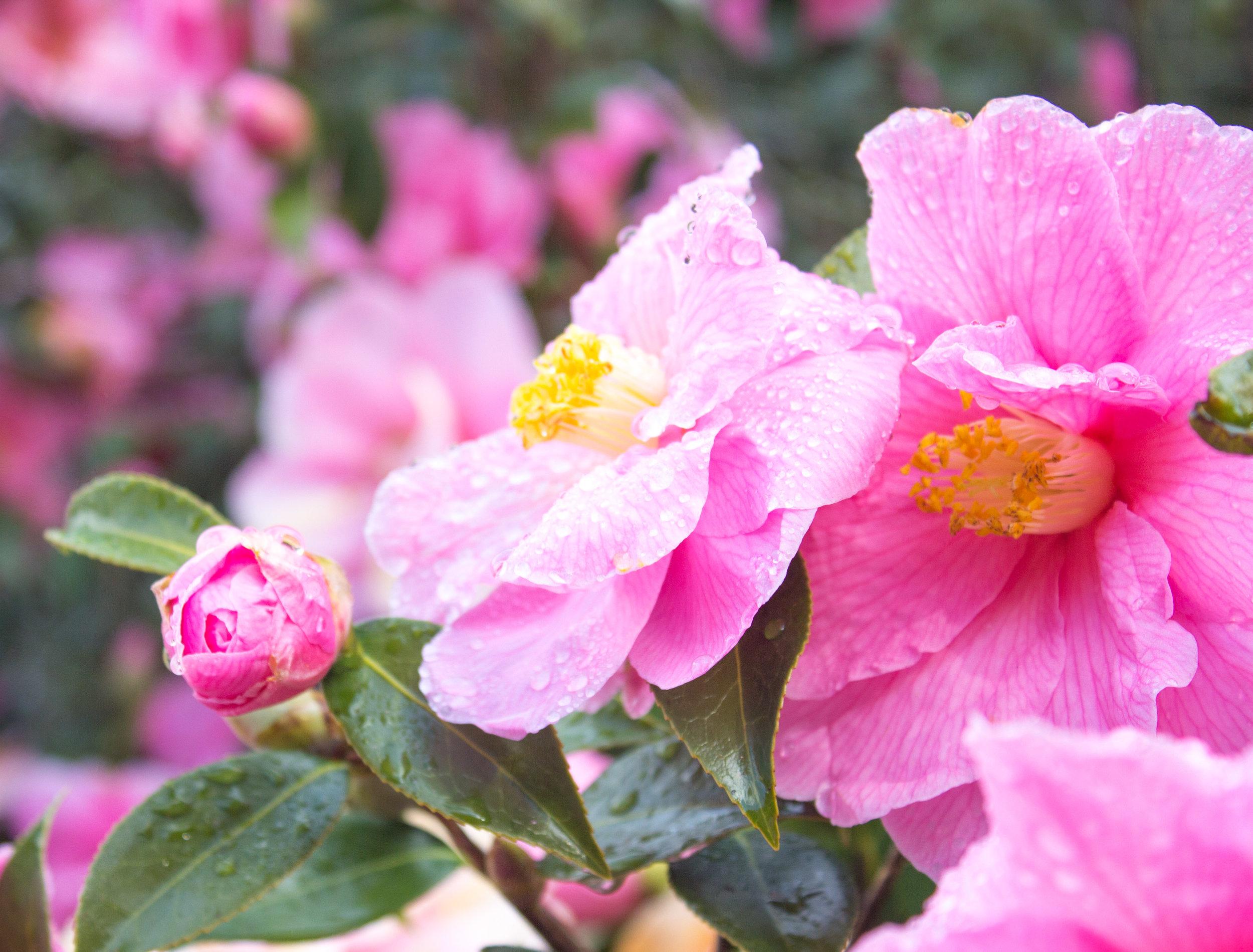 spring-8.jpg